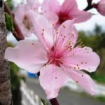 【パスクワレ・ブルーニ】昨日は3月3日、そして今日は3月4日です。