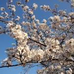 【それぞれの】春が来たけど【何ともしがたい】ROLEX サブマリーナ 116610