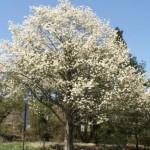 【シンボルツリー】自然を取り入れよう【木】