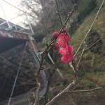 【季節】春よ、こいっ!【買取り】