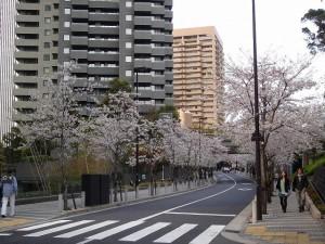 sakura_201104-01