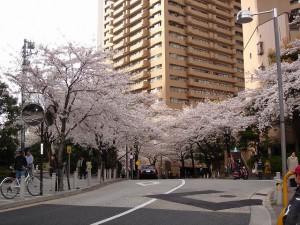 sakura_20110402