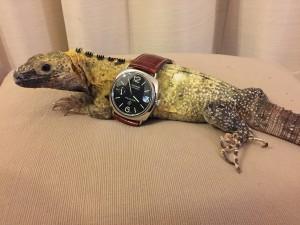 イグアナと時計