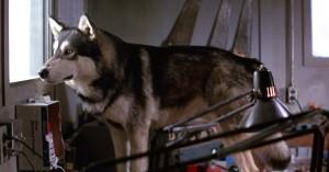遊星からの物体X 犬